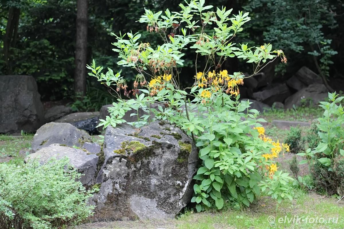 Японский сад 15
