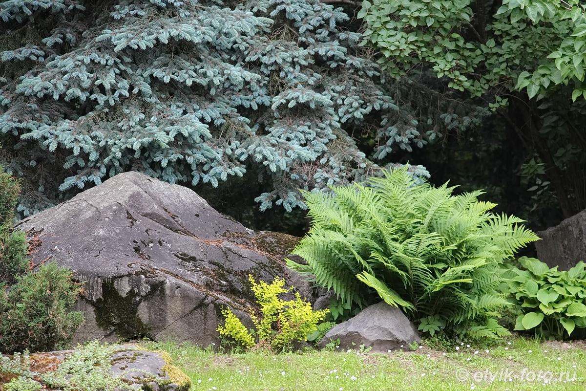 Японский сад 16