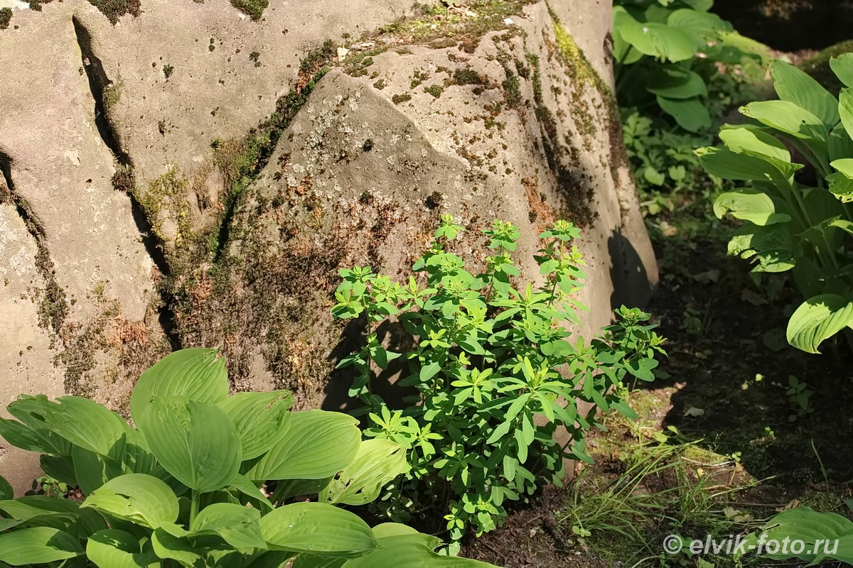 Японский сад 18