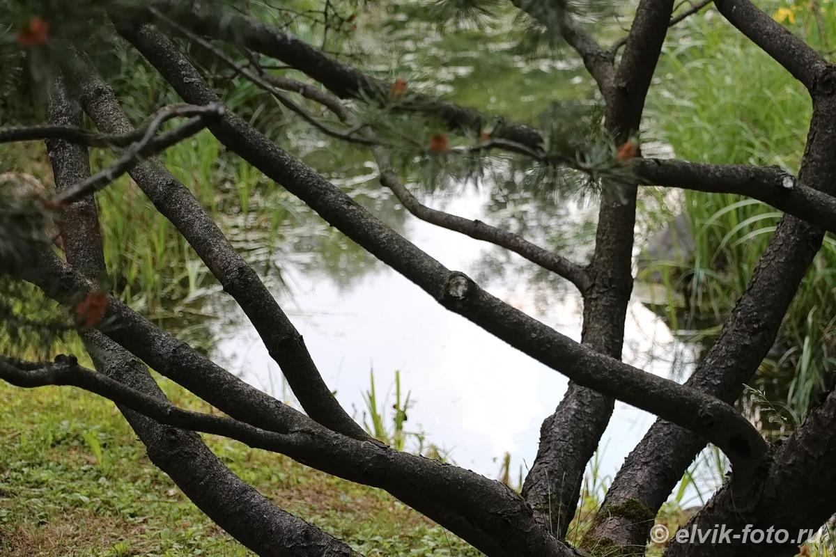 Японский сад 23