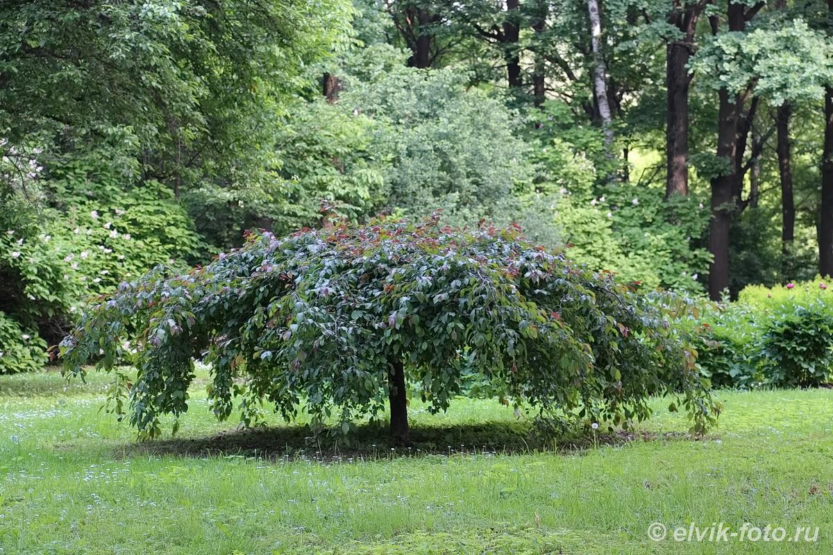 Японский сад 26