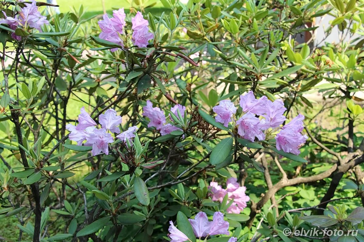 Японский сад 30