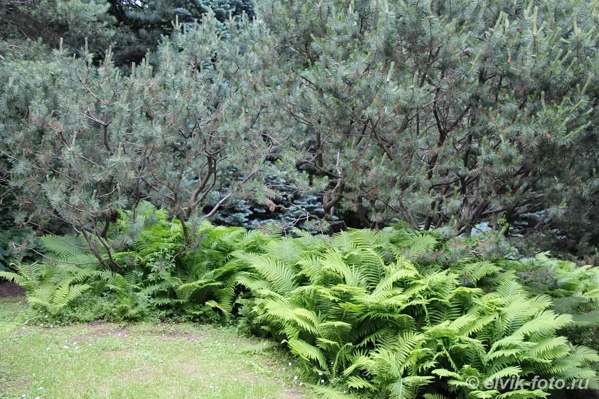 Японский сад 33
