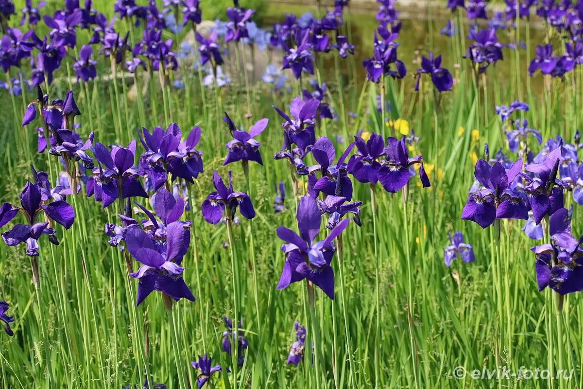 Японский сад 38