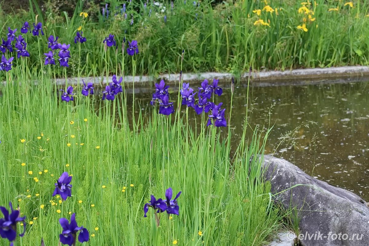 Японский сад 43