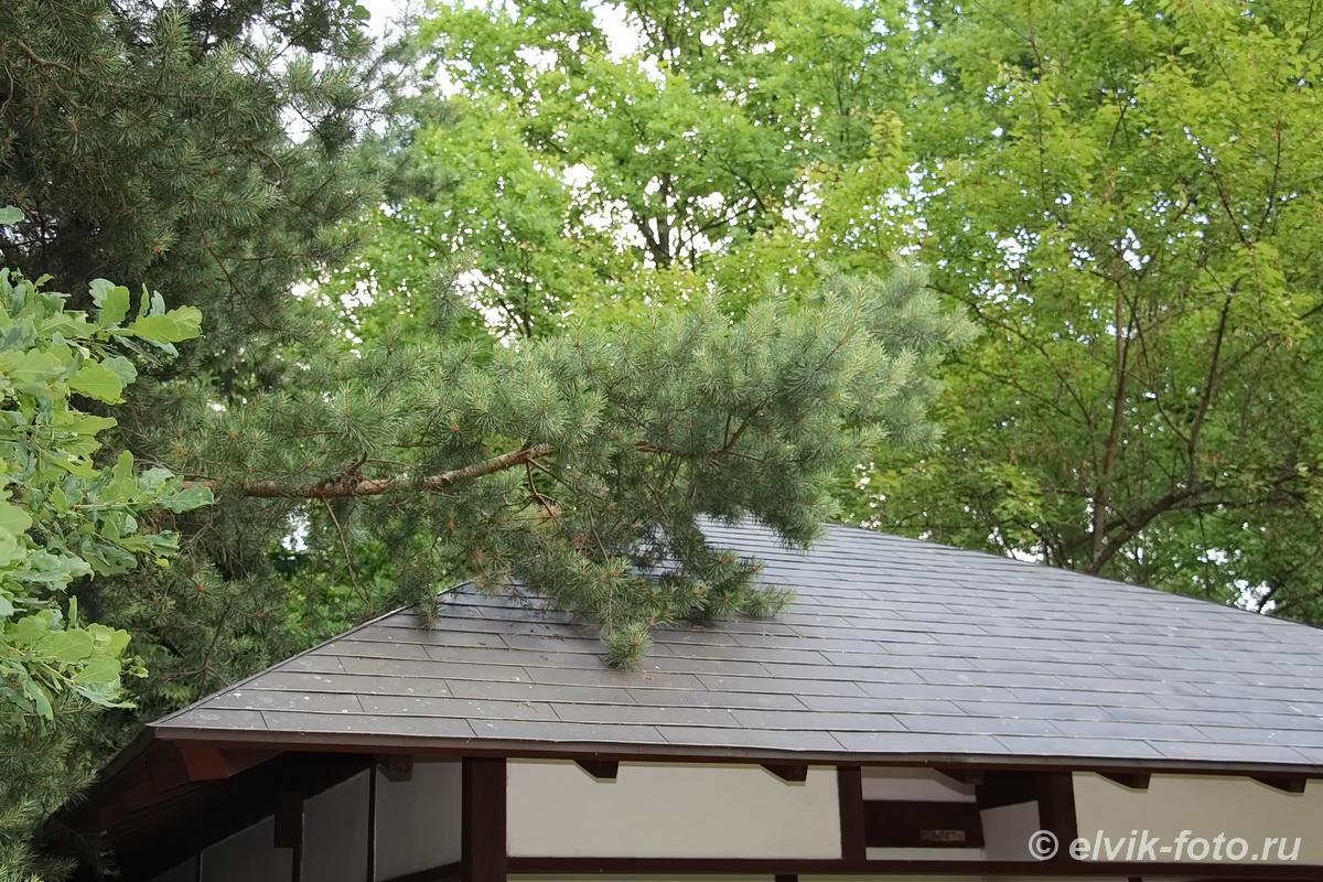 Японский сад 52