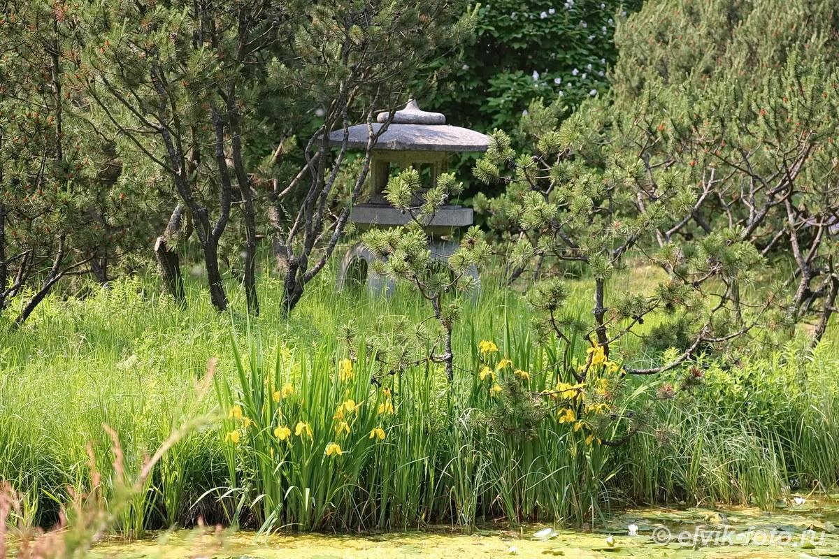 Японский сад 8