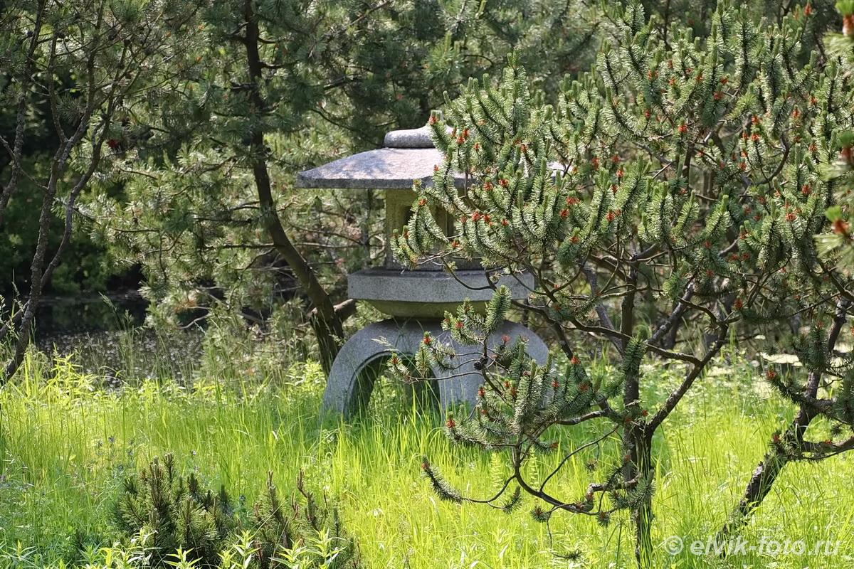 Японский сад 9