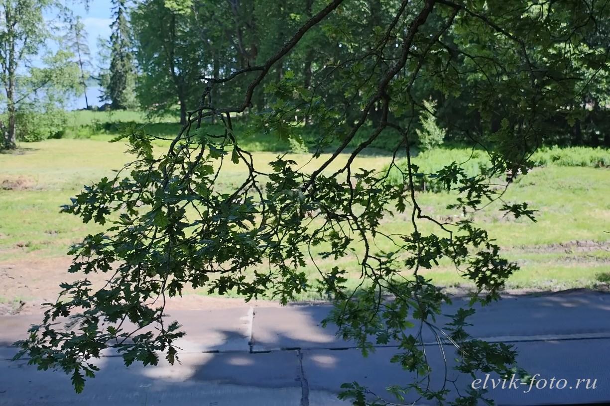 Парк Монрепо46