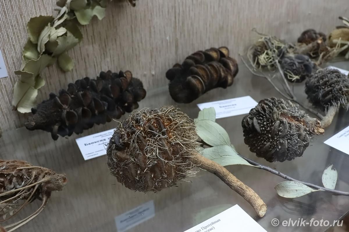 Главный ботанический сад им. Н.В. Цицина РАН, Ботанический музей