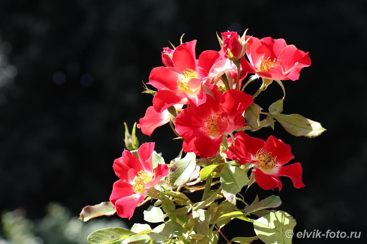 Никитский ботанический сад 11