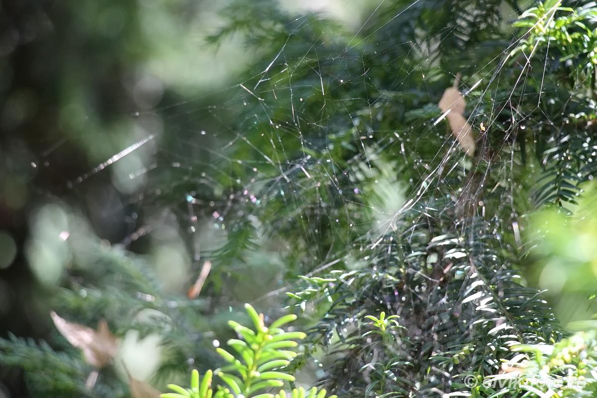 Никитский ботанический сад 15
