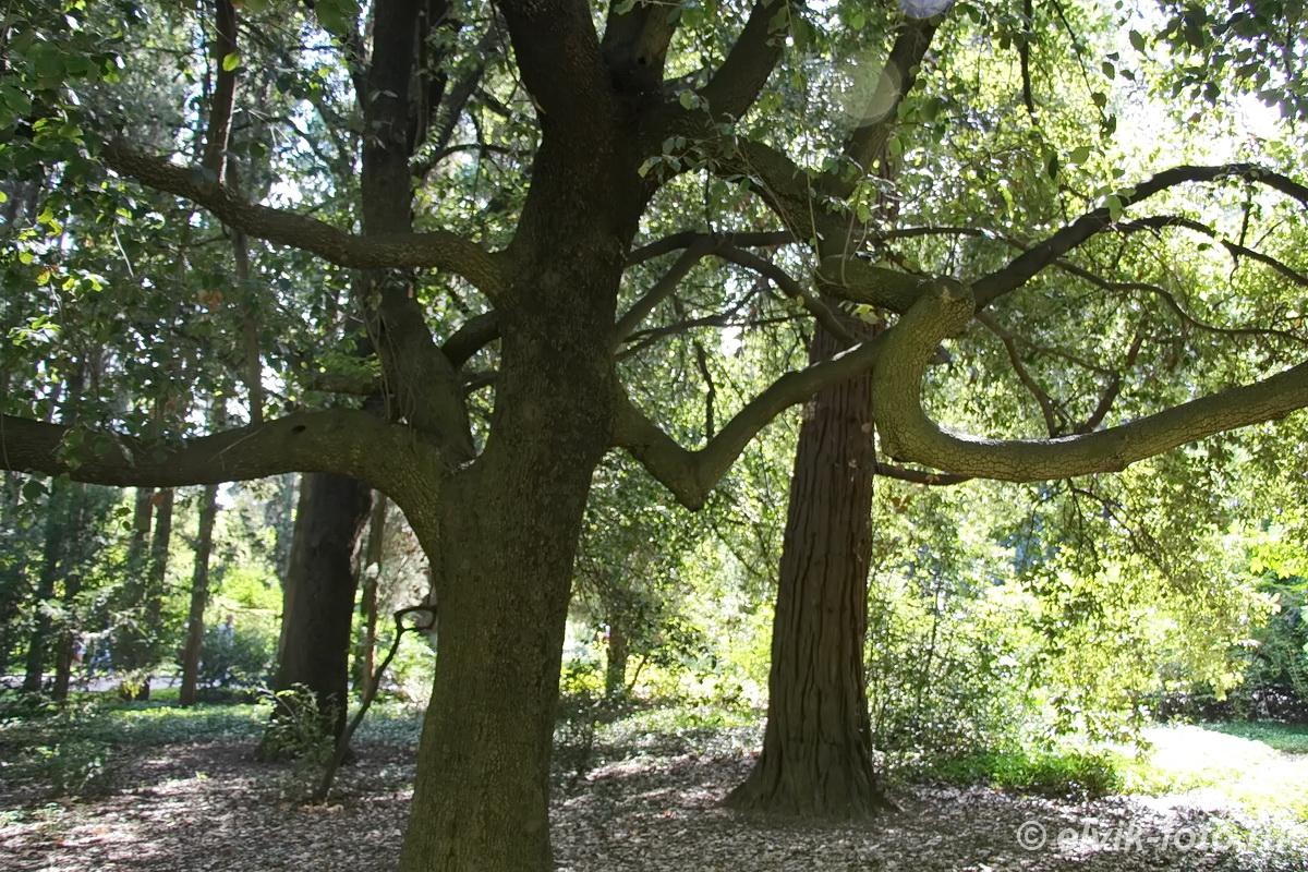 Никитский ботанический сад 16