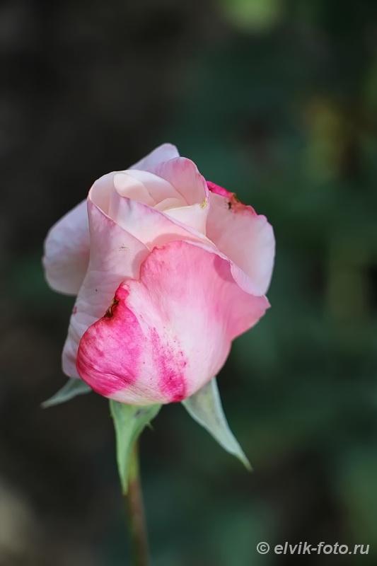 Никитский ботанический сад 17