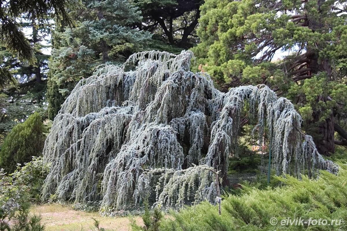 Никитский ботанический сад 22