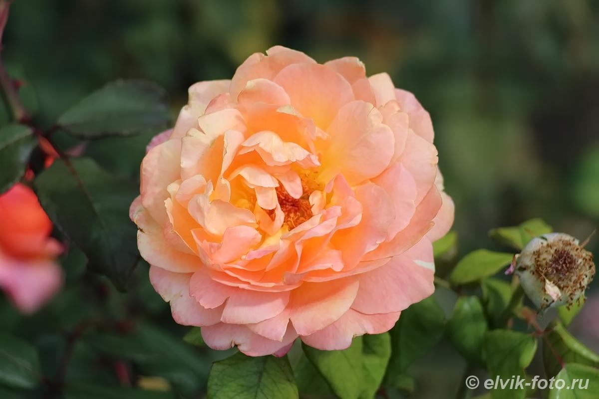 Никитский ботанический сад 23