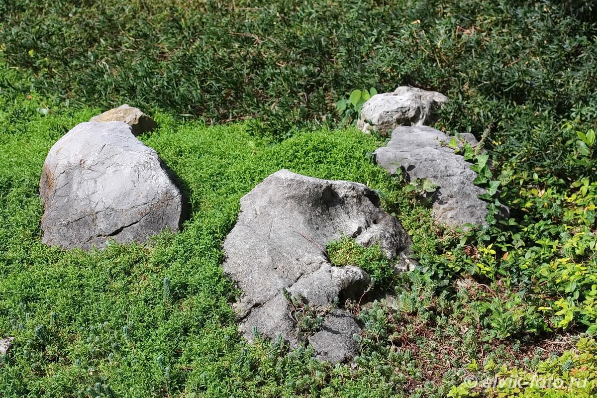 Никитский ботанический сад 24