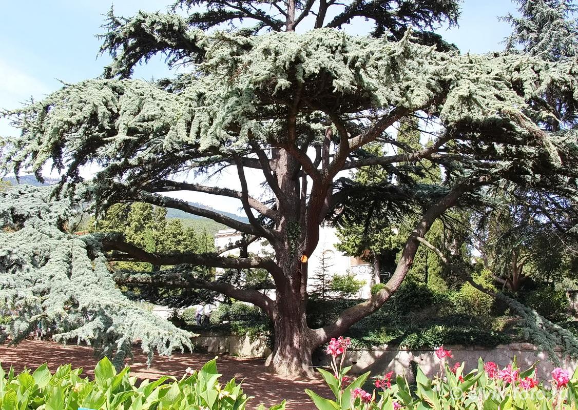 Никитский ботанический сад 28