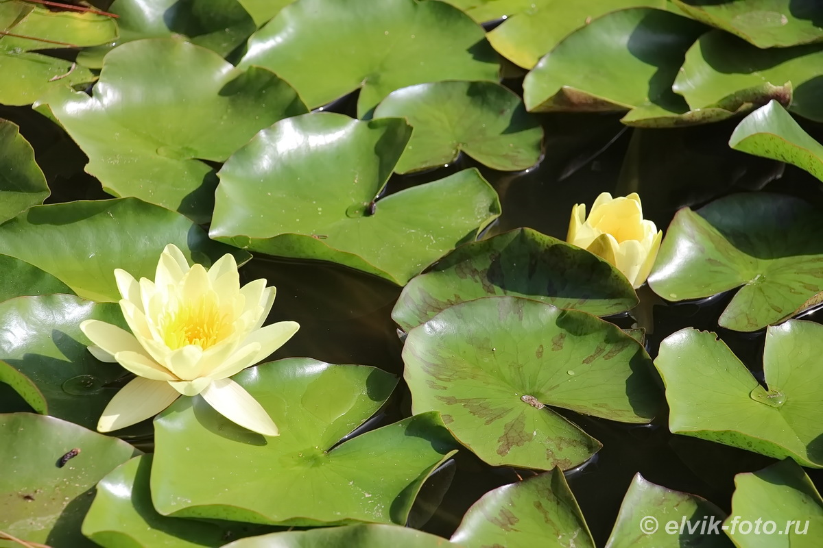 Никитский ботанический сад 31