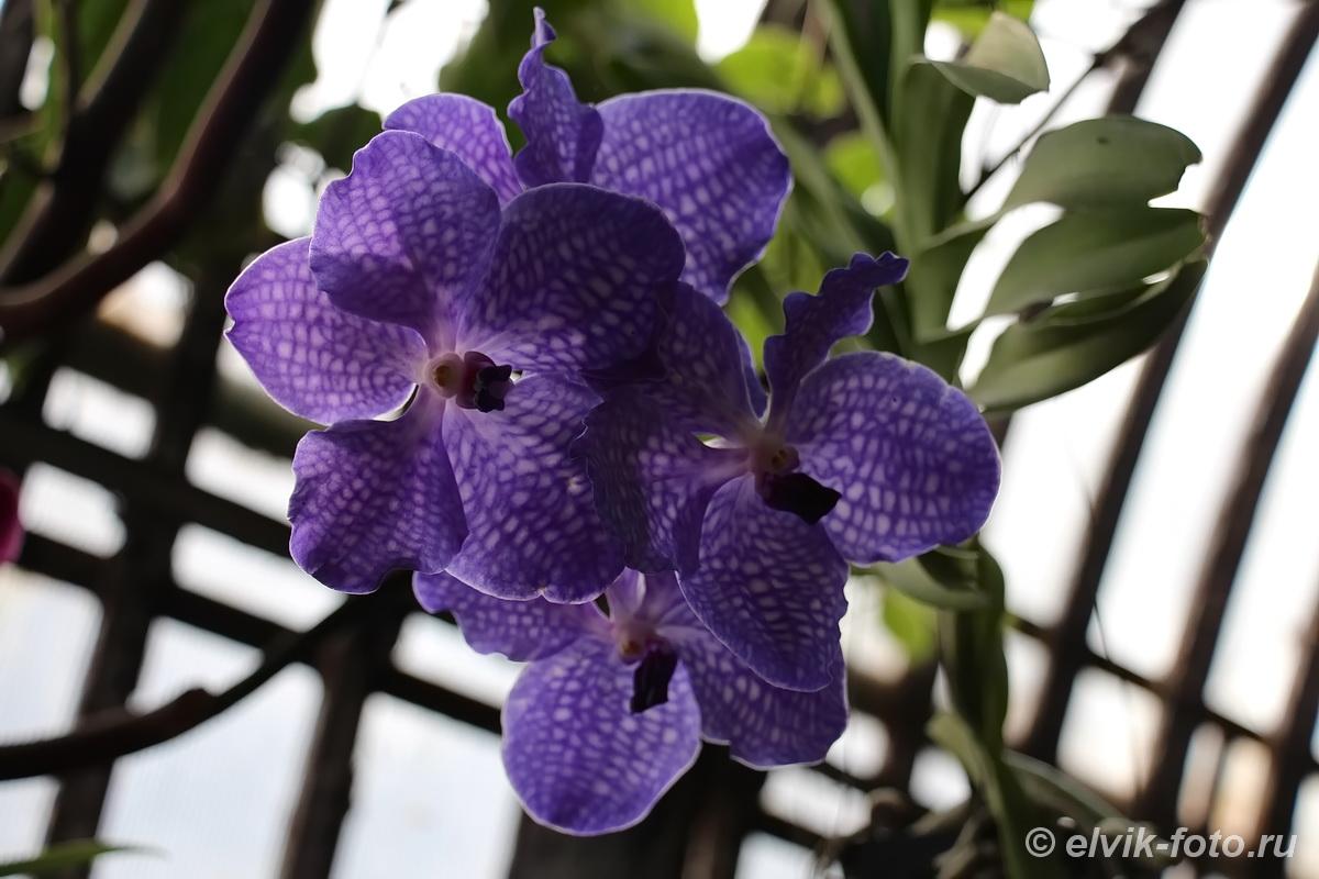Никитский ботанический сад 34