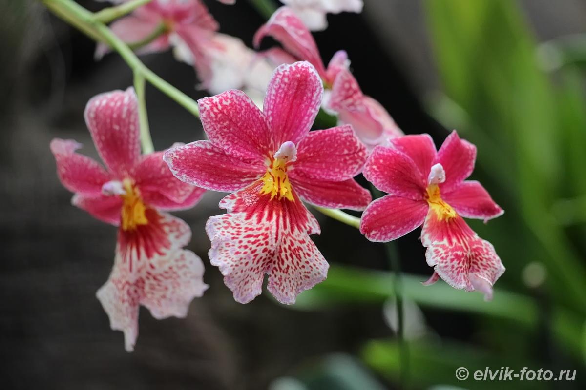 Никитский ботанический сад 36