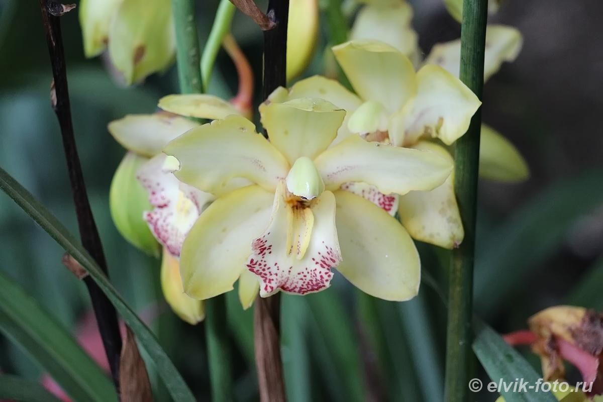 Никитский ботанический сад 42