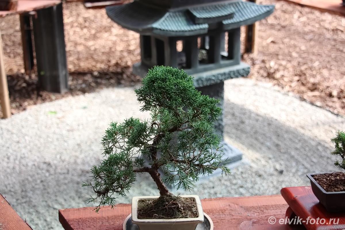 Никитский ботанический сад 43