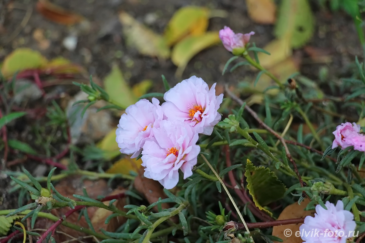 Никитский ботанический сад 45