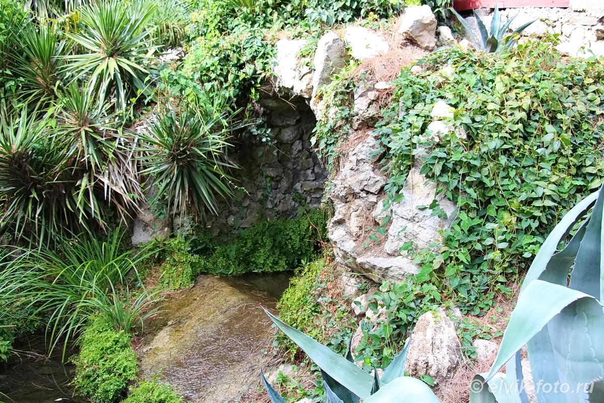 Никитский ботанический сад 47