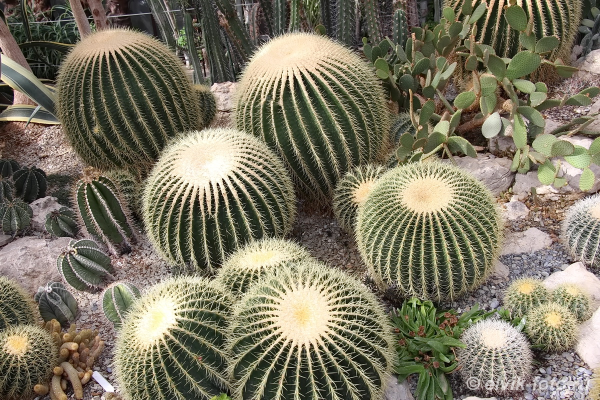 Никитский ботанический сад 54