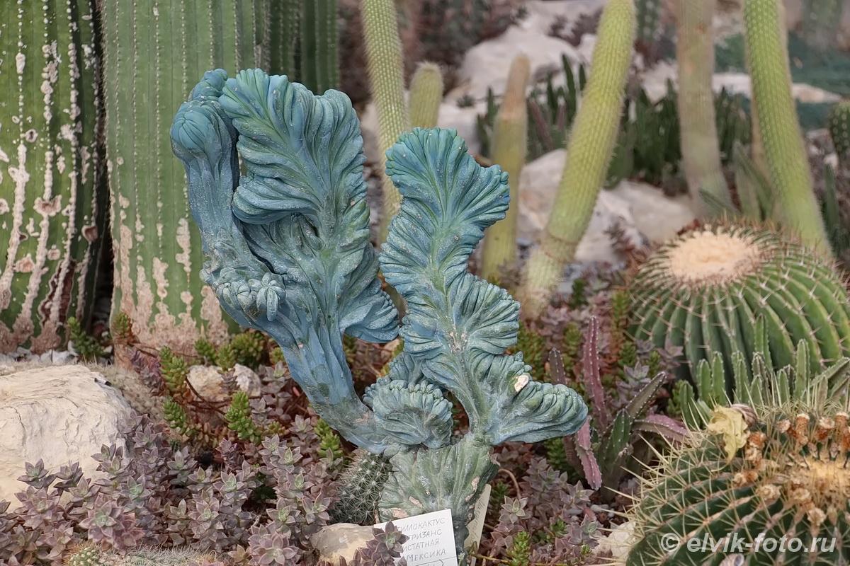 Никитский ботанический сад 55