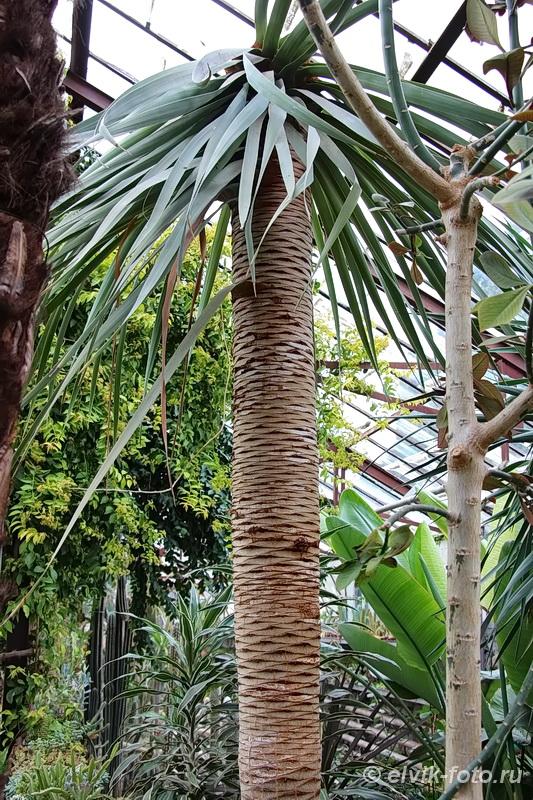 Никитский ботанический сад 58