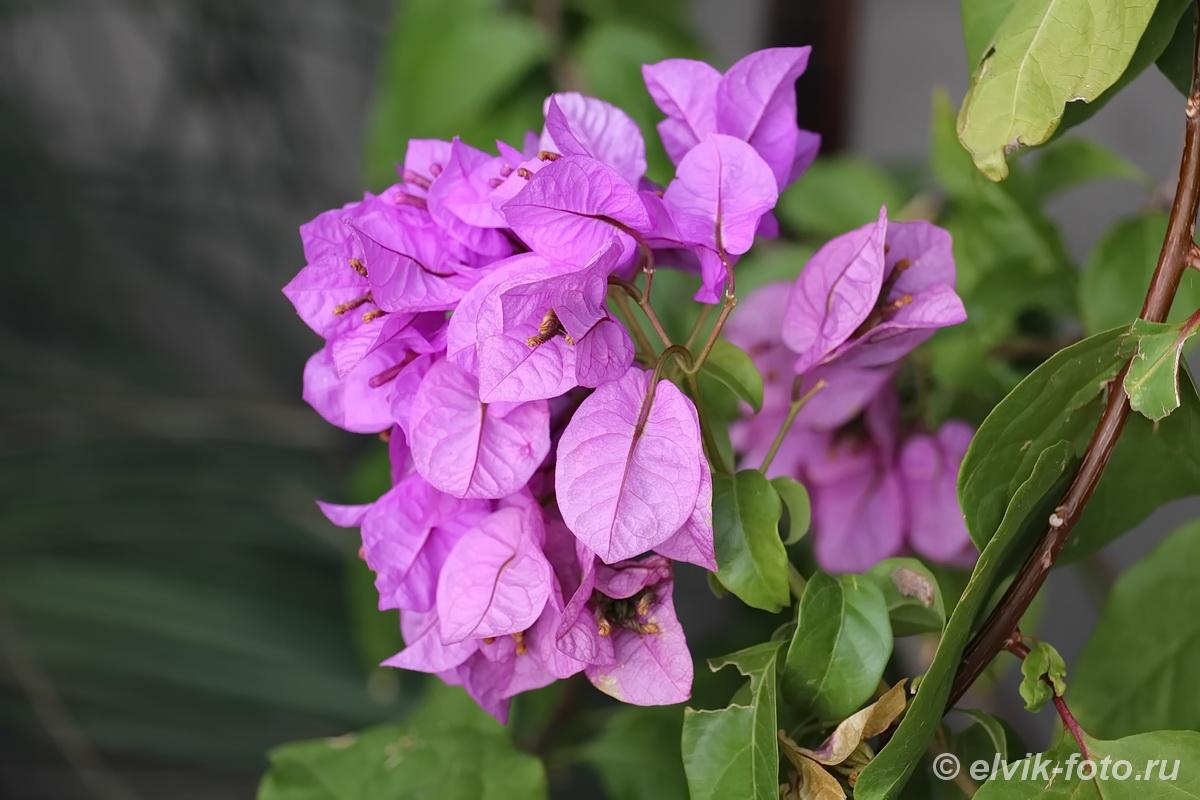 Никитский ботанический сад 59
