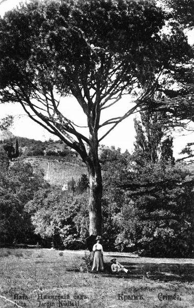 Никитский ботанический сад 6