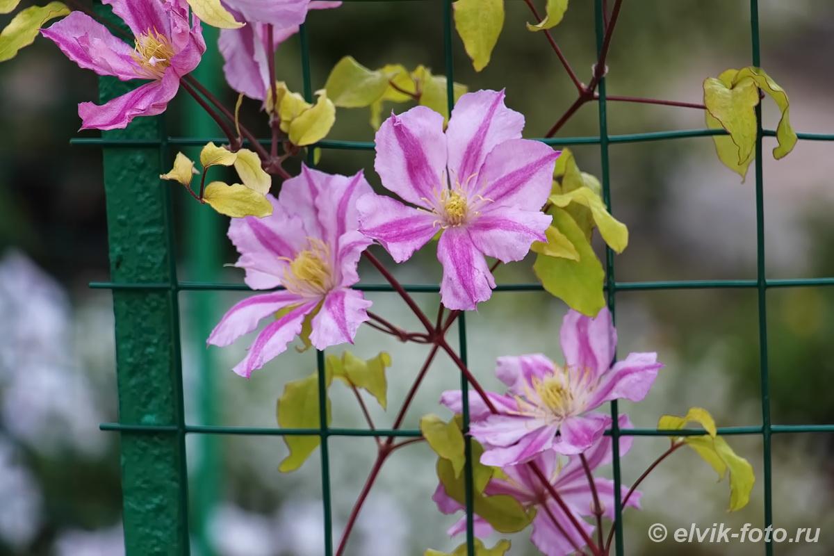 Никитский ботанический сад 68