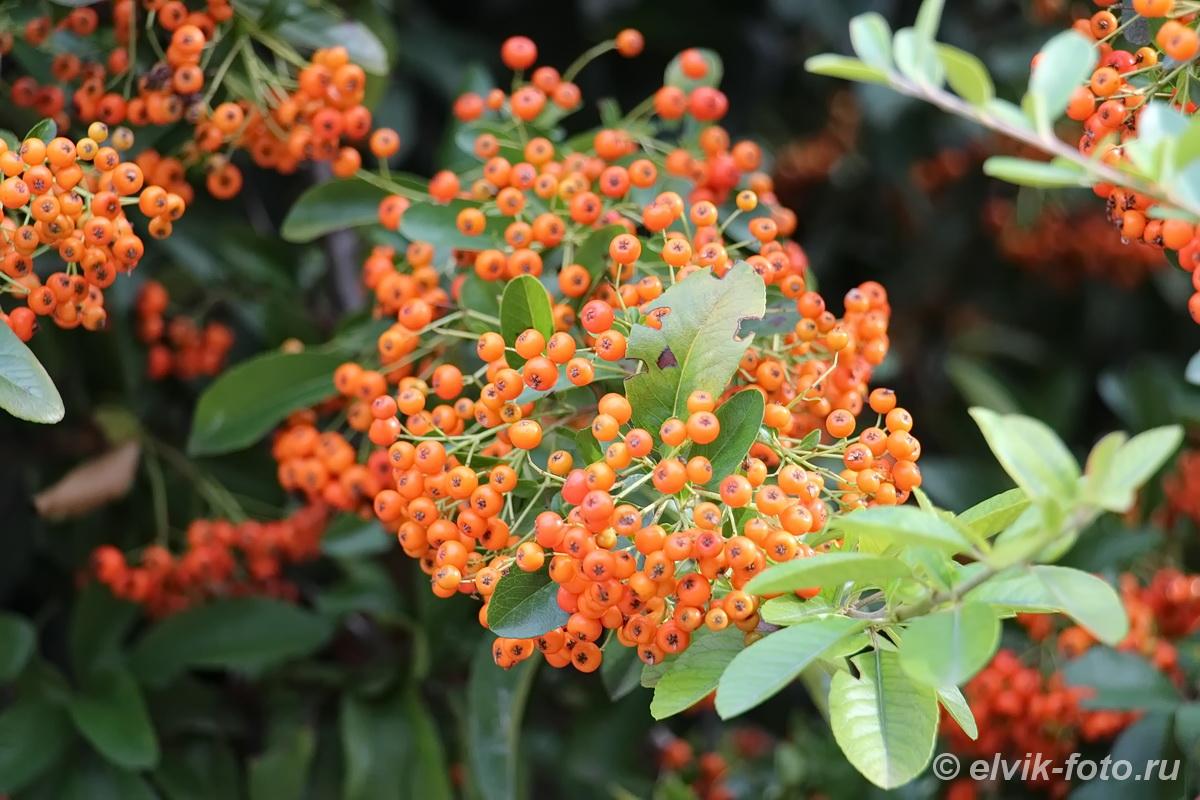 Никитский ботанический сад 70
