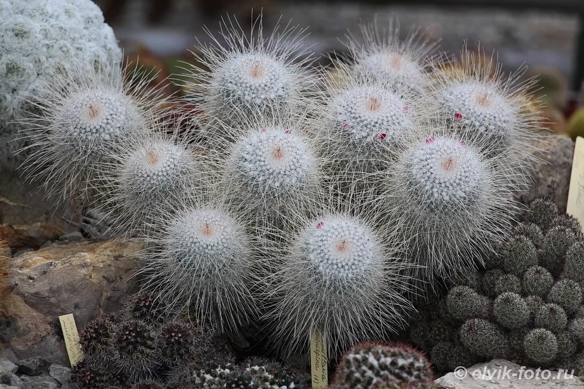 Никитский ботанический сад 78