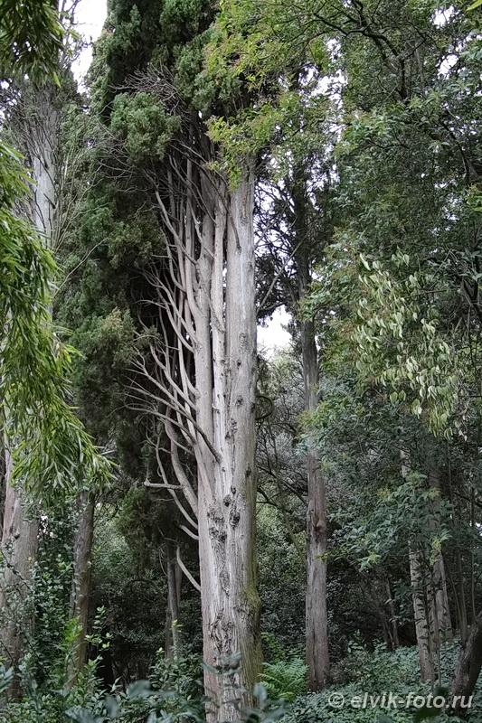 Никитский ботанический сад 79