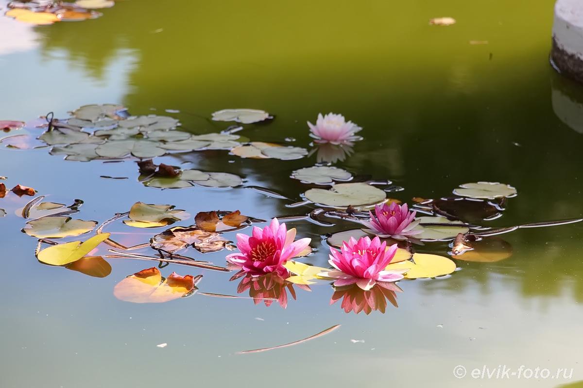 Никитский ботанический сад 8