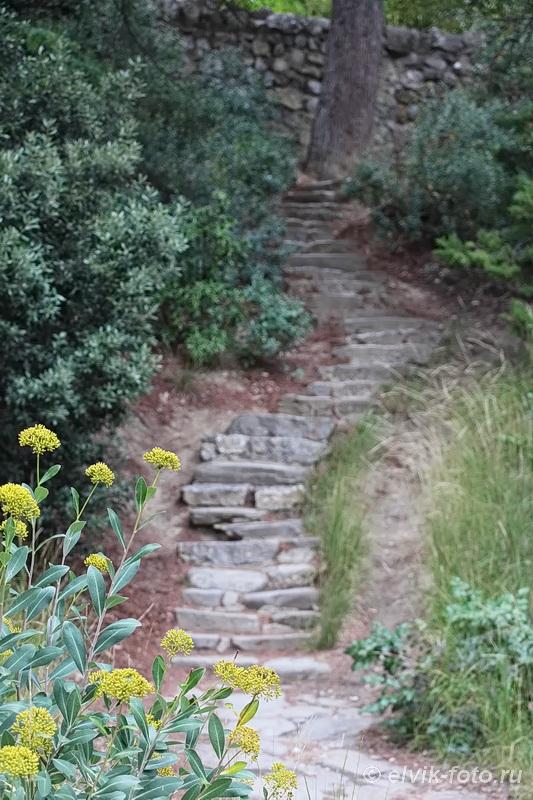 Никитский ботанический сад 85
