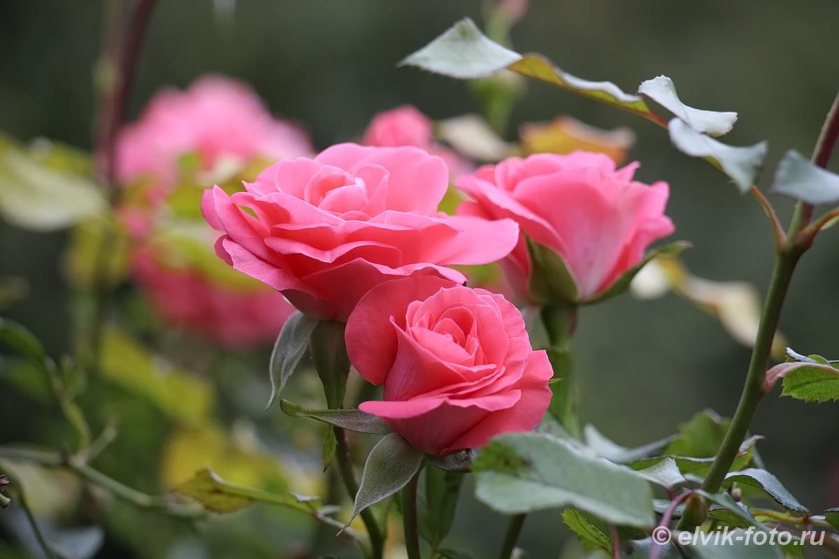 Никитский ботанический сад 88
