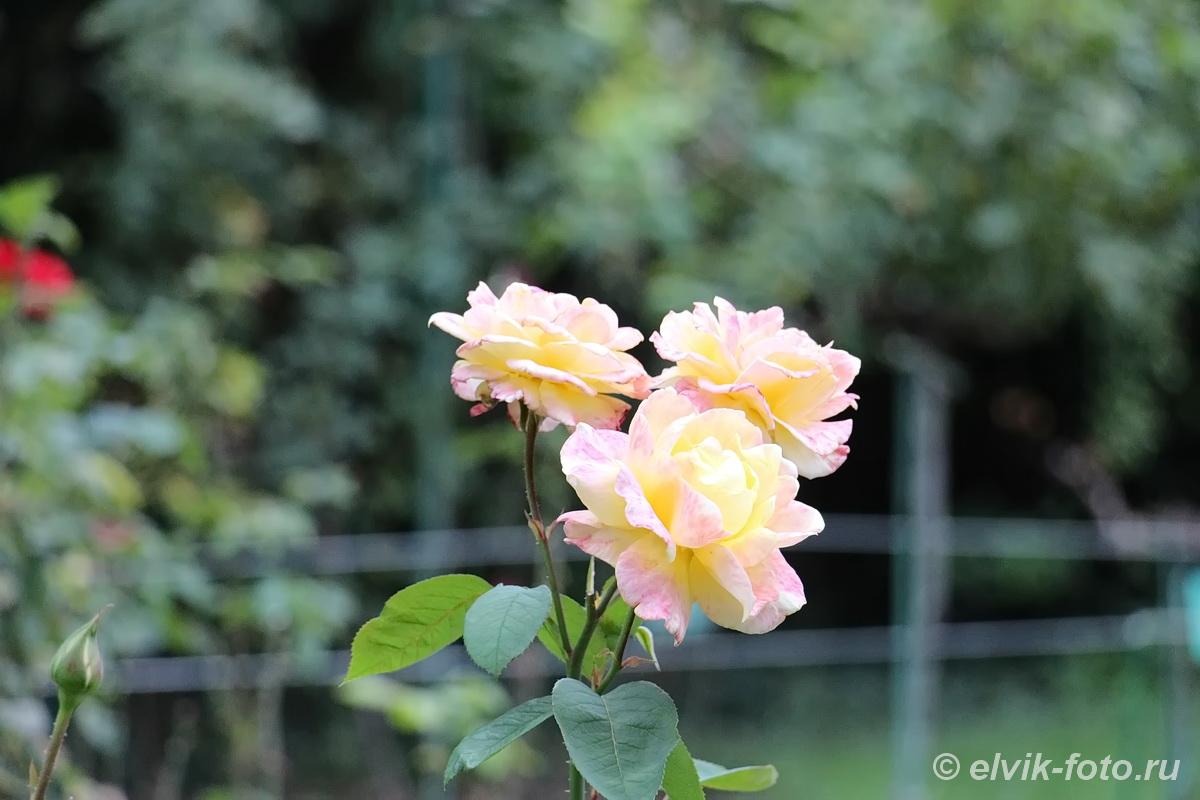 Никитский ботанический сад 89