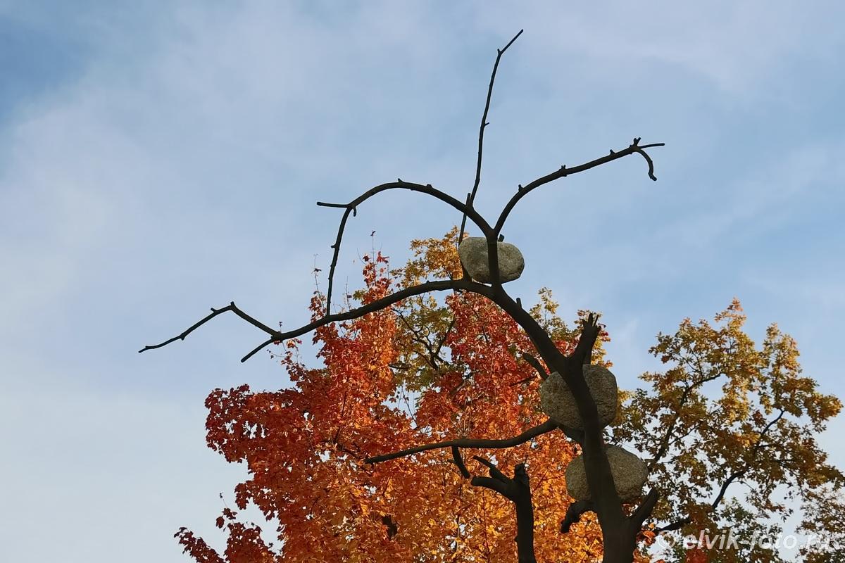 penone tree 11