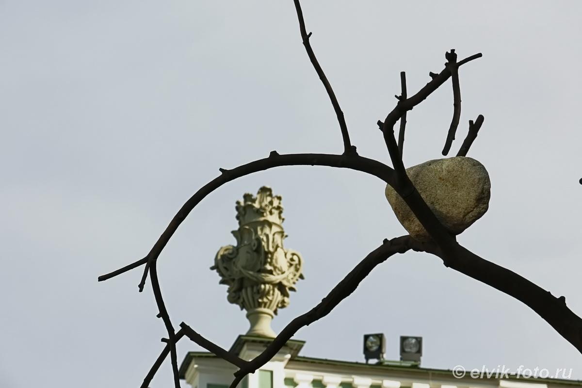 penone tree 4