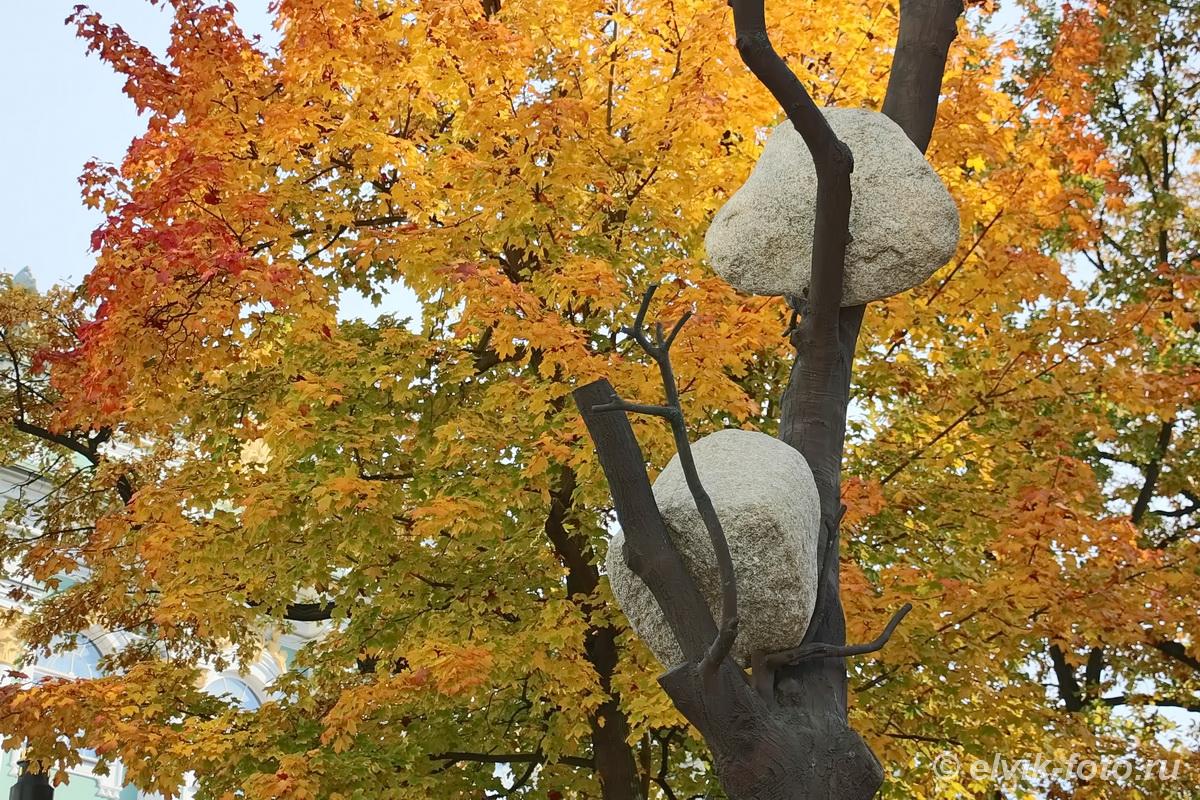 penone tree 5