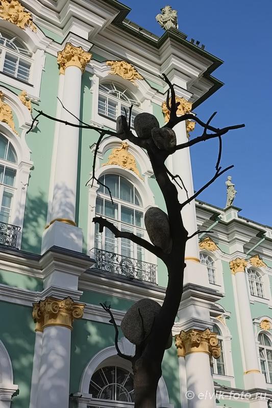 penone tree 8